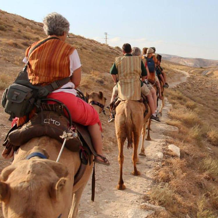 Camel ride in Israel